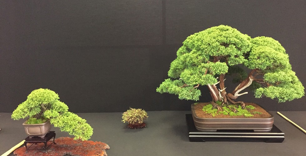 Juniper show display